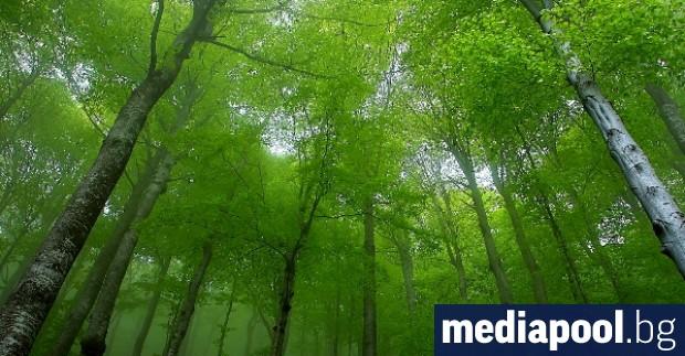 Голям интерес от страна на собственици на малки частни гори