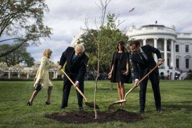 Републиканци предлагат САЩ да засадят 1 трилион дървета за борба с климатичните промени