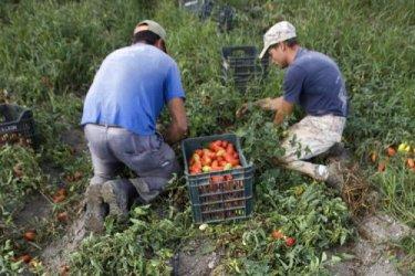 Производители на плодове и зеленчуци получиха над 73 млн. лева
