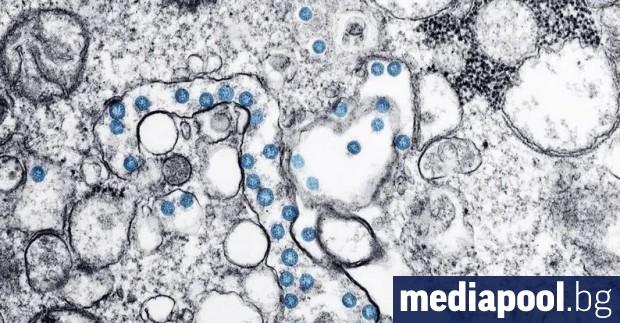 Коронавирусът може да остане жизнеспособен до 3 дни и дори