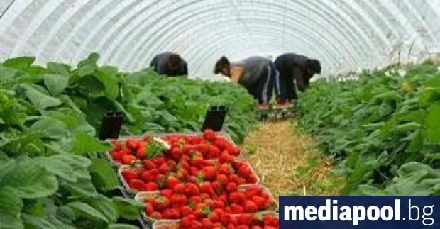 Британски фермери обсъждат организирането на чартърни полети, за да докарат