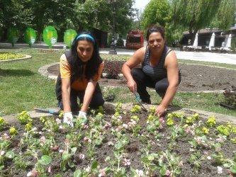 Столична община спря поръчка за близо 7 млн. лв. за цветя