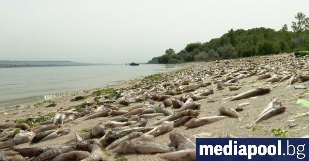 Взетите експресни водни проби от мястото с тоновете мъртва риба