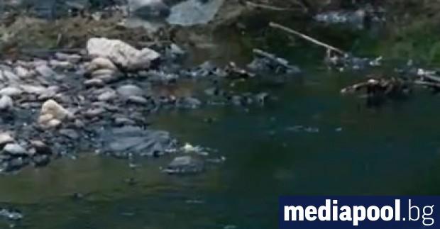 Пореден сигнал за замърсени реки и умряла риба в Пловдивския