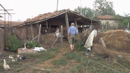 ВАС обяви, че не е имало безспорни данни за чума по овцете в Болярово