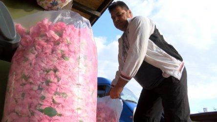 ДФЗ плати за пръв път субсидия за зимно пръскане на рози