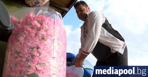 Производители на маслодайни рози са получили за пръв път субсидия