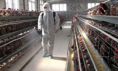 До 7 хил. евро за българските ферми, пострадали от коронавирус