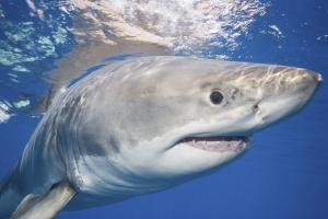 Млад сърфист бе убит от акула в Австралия