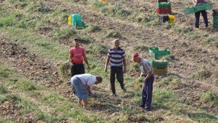 ДФЗ завишава теренните проверки на плодове и зеленчуци за Кампания 2020