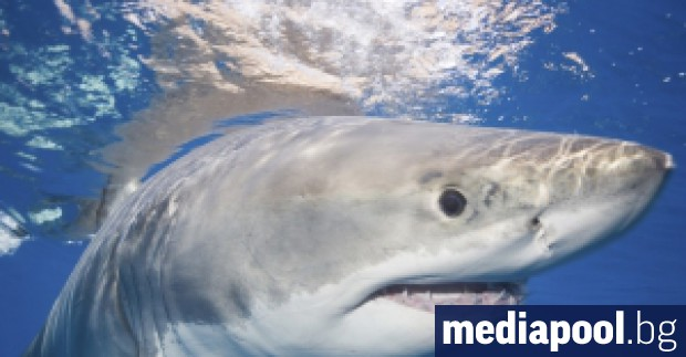 Седемнайсетгодишно момче загина в Австралия при нападение от акула, съобщи