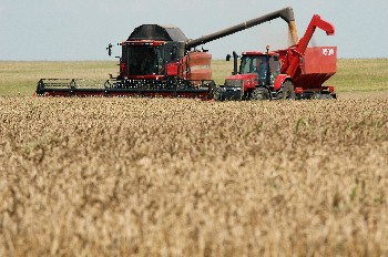 ДФЗ отпуска 15 млн. лева за нисколихвени кредити на зърнопроизводителите