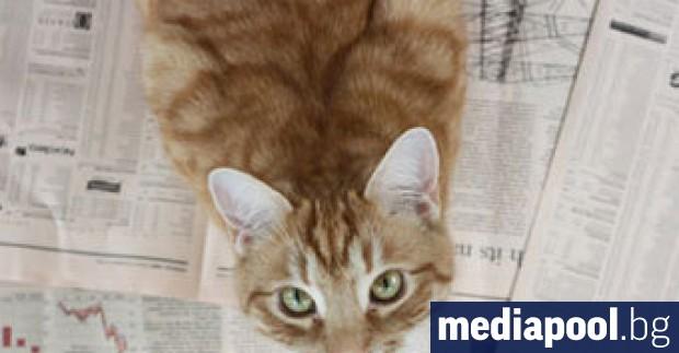 По случай Международния ден на котката, 8 август, британският в.