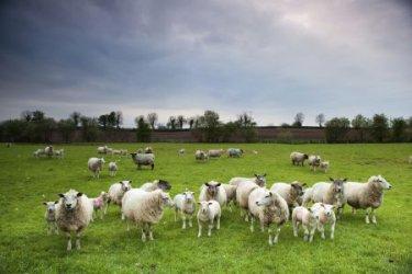"""Земеделието се втурна на незабавна проверка за """"виртуални"""" животни"""