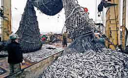 Правителството насочва повече европари за рибарски пристанища