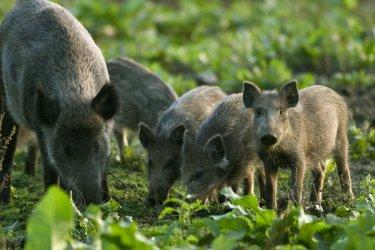 Държавата ще опрощава вноски на ловни концесионери