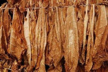 """Тютюнопроизводители ще получават милиони за """"алтернативен поминък"""" още 2 години"""