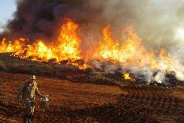 Бразилия обяви извънредно положение заради пожари в най-големите тресавища в света
