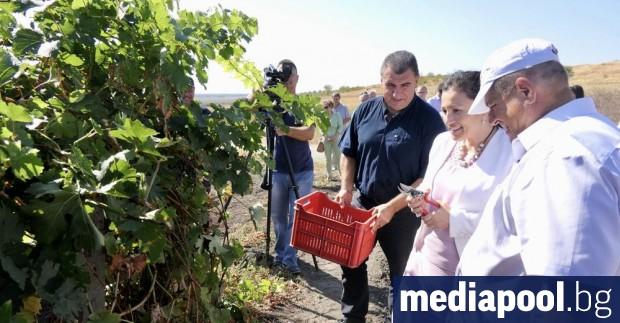 Производителите на грозде с одобрени проекти от 4 май до