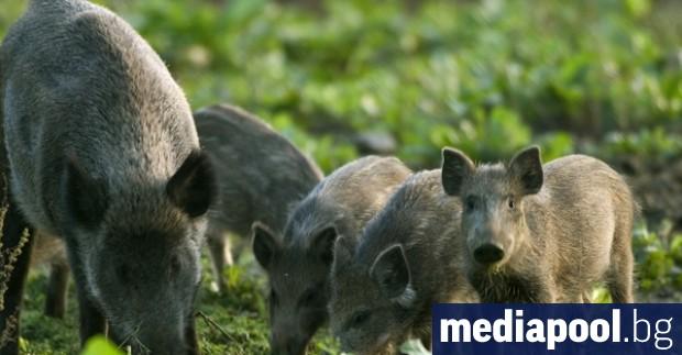 Министерството на земеделието готви преференции към частници и ловни сдружения,