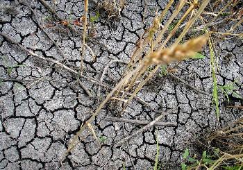 Компенсации до 80% от разходите на фермерите при унищожена от сушата продукция