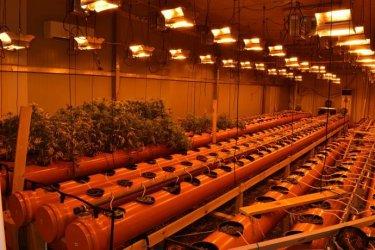 """Гешев с нов """"голям успех"""": Разбита е наркооранжерия с марихуана за 70000 лв. (снимки)"""