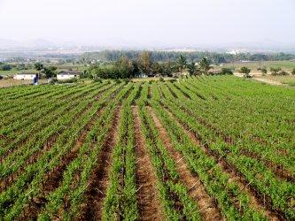 Крайъгълен камък или катастрофа? Новата аграрна реформа в ЕС среща сериозна критика