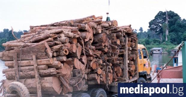 600 000 кубика, или всеки десети кубик от официалния дърводобив