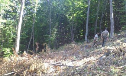 Държавата е купила 1800 дка части гори през 2020 г.