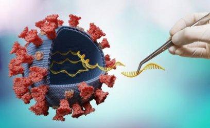 Какво се знае за новата мутация на коронавируса