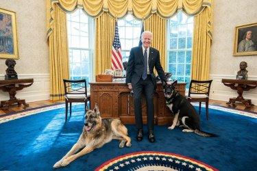 Ухапване: Кучетата на Байдън бяха отпратени от Белия дом