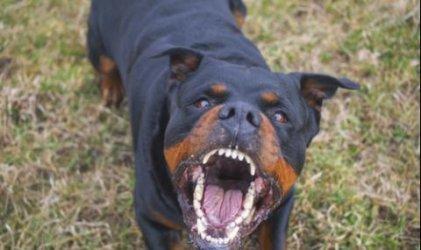 Домашно куче нахапа лошо 7-годишно дете в пазарджишко село