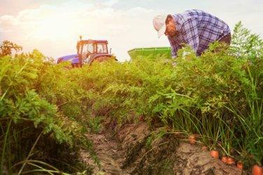 Фермерите могат да кандидатстват онлайн за 1.6 млрд. лв. субсидии за ниви