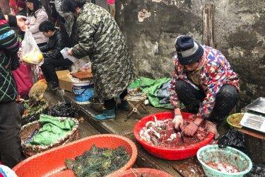 СЗО призова страните да спрат продажбата на живи диви бозайници на пазарите за храни