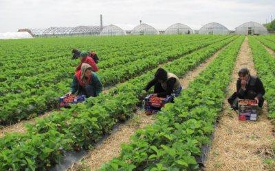 Пандемията увеличава риска от измами при търсенето на работа в чужбина