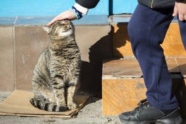 """""""Четири лапи"""" и Столична община ще броят бездомните котки"""