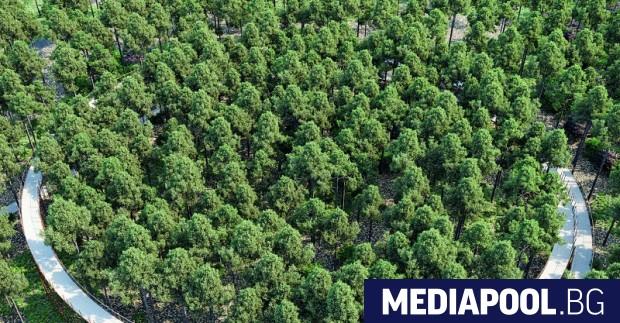 Служителите в горското стопанство искат възстановяване на ранга на националното
