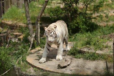 Зоопаркът в София посреща 133 години през май