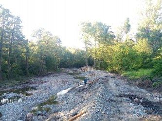 Скандал със скрита сеч на стотици дървета при почистването на р. Искър