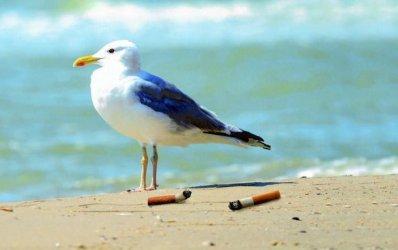 Кампания срещу фасовете в пясъка започва на 46 български плажа