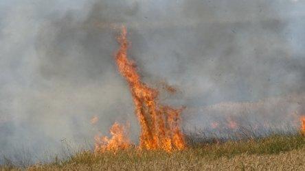 Голям пожар край Благоевград. Горят житни ниви и лозя
