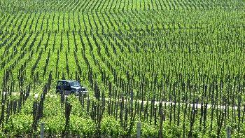 Фонд ще подпомага винарския сектор