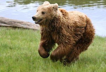 Платежна карта прави отчисления в подкрепа на българските мечки