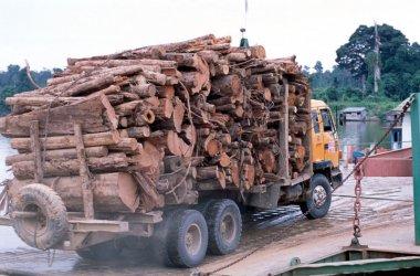 """Държавно ловно стопанство """"натискало"""" с безкрайни проверки частни предприемачи в дърводобива"""