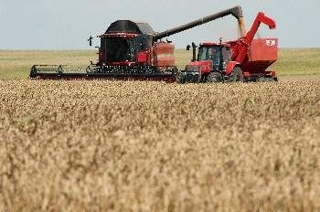 България с рекордни над 7 млн. тона реколта на пшеница