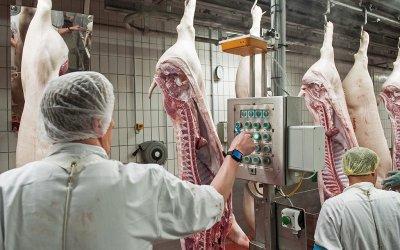 Великобритания търси 800 касапи от чужбина, за да избегне масово избиване на свине