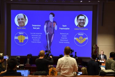 Откривателите на рецептори за температура и допир с Нобелова награда по медицина