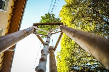 София засажда над 2000 дървета тази есен